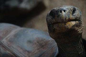 schildpad gered