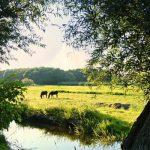 Nederlandse Amazon