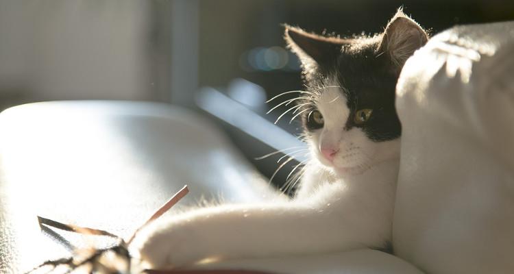 katten poezen huisdieren