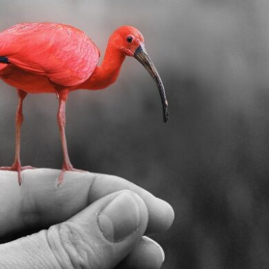 Photoshop flamingo