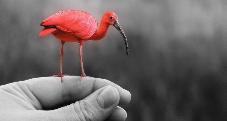 Photoshop flamingo