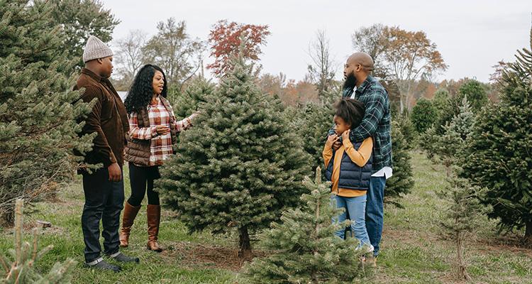 Mensen kiezen een kerstboom uit