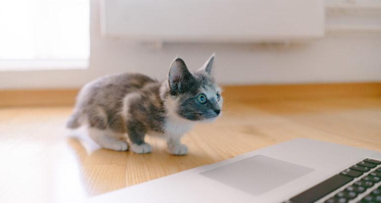 Kat voor laptop
